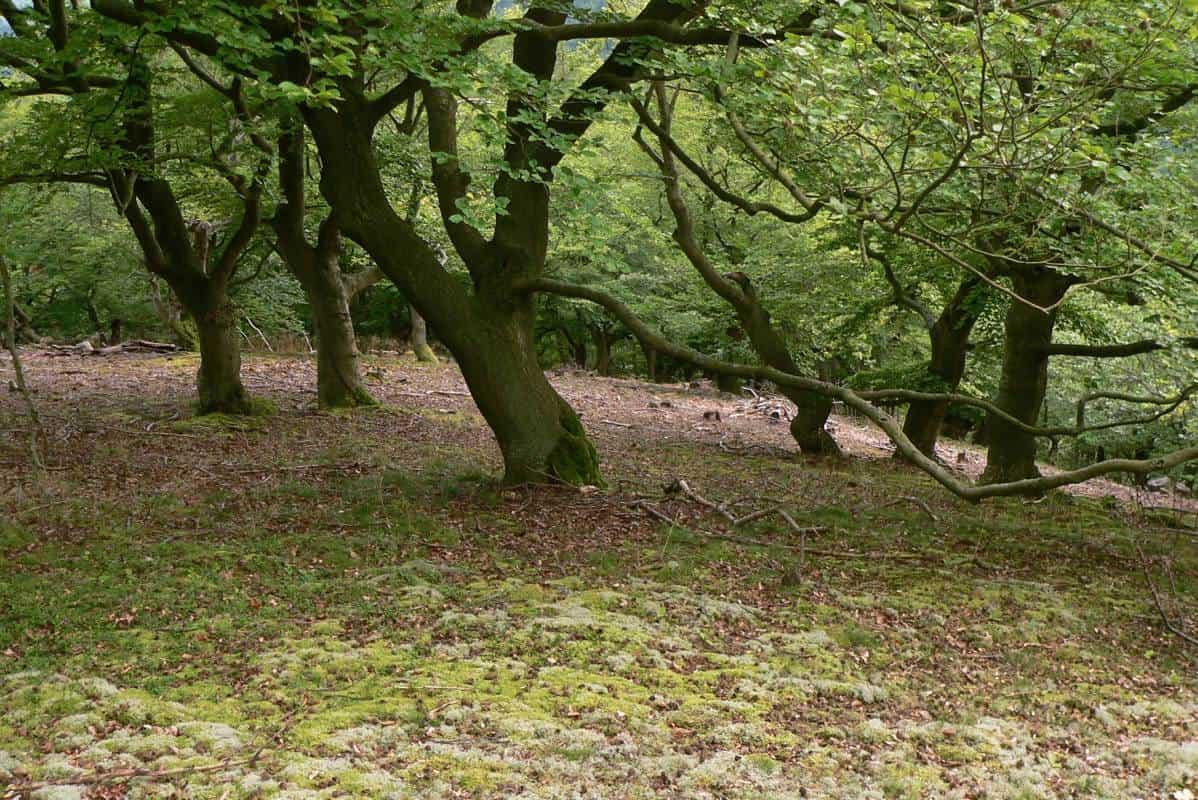 Vom Baum zum Holztisch - Eichenwald